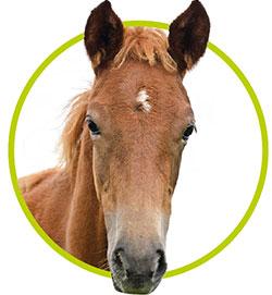 KNZ paard