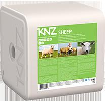 KNZ sheep
