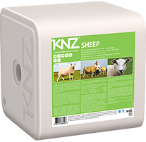 KNZ liksteen sheep